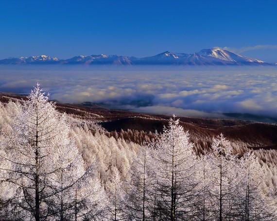 カラマツの樹氷林と雲海の浅間山