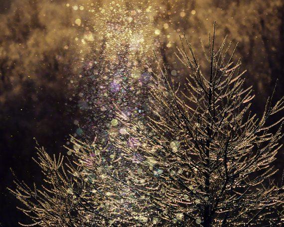 ダイヤモンドダストと朝日に輝く凍ったカラマツの枝