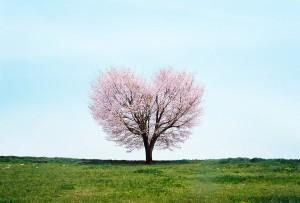 丘の上のハートの桜の木