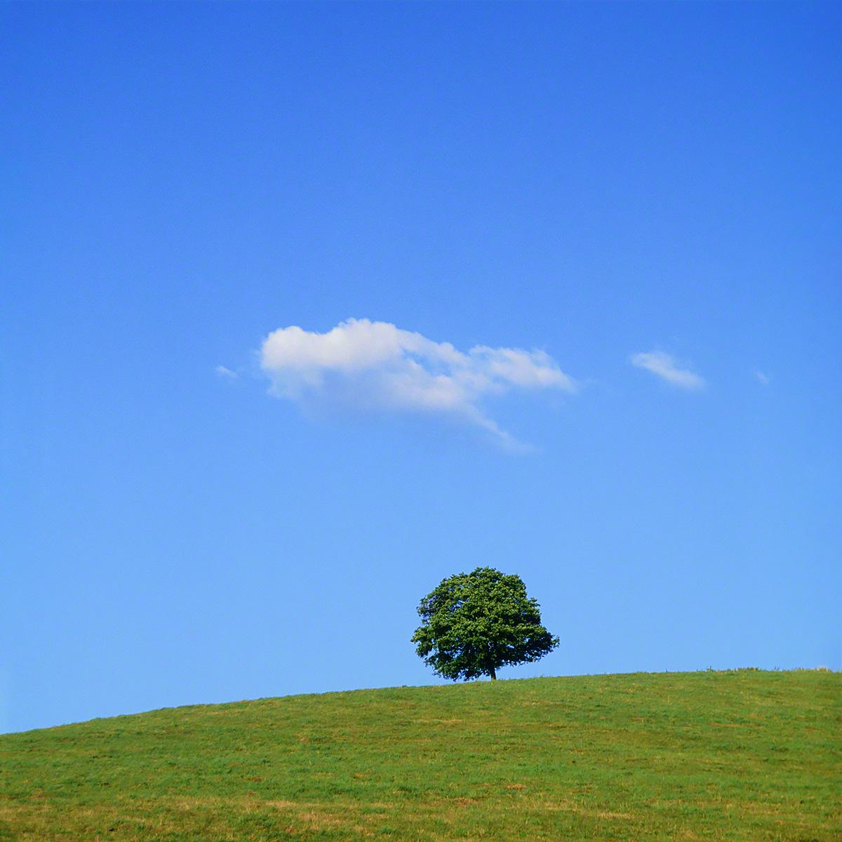 丘の上の木とはぐれ雲