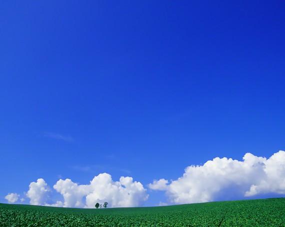 入道雲とジャガイモ畑と親子の木