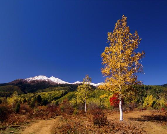 初冠雪の乗鞍岳と黄葉の白樺