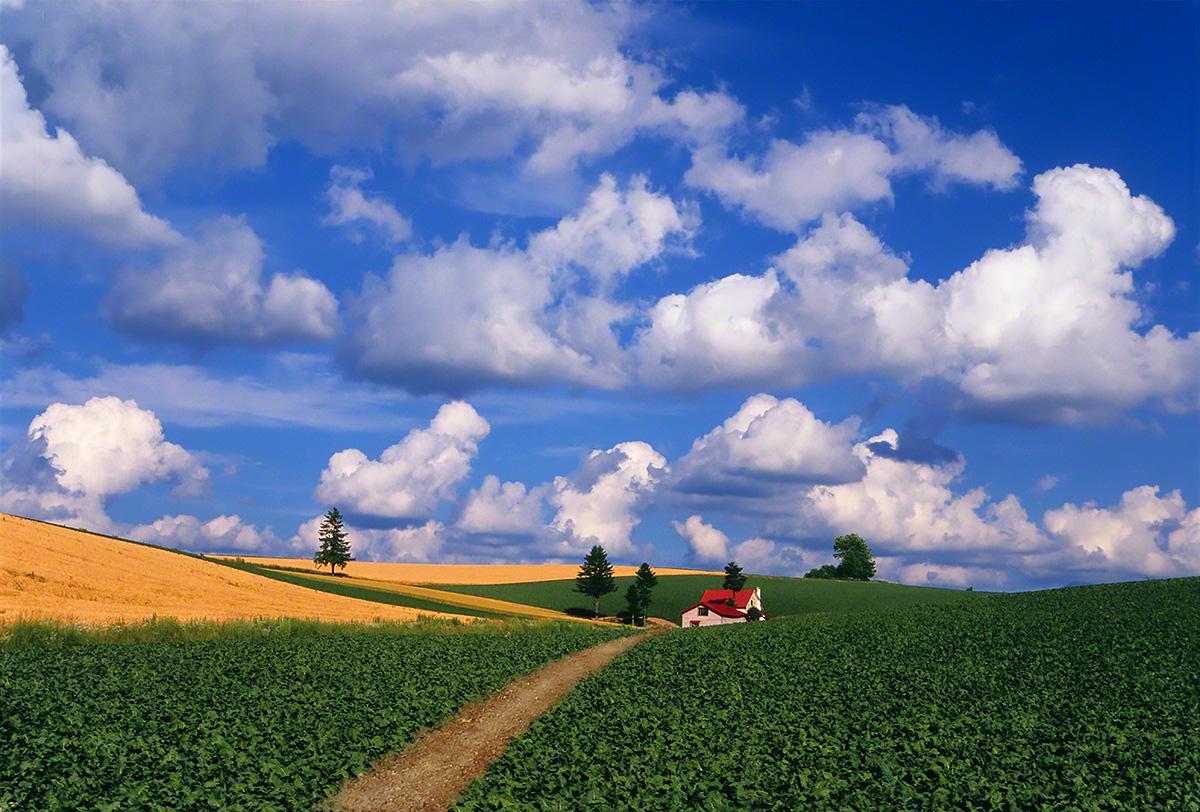 夏の雲とジャガイモ畑と赤い家へと続く道