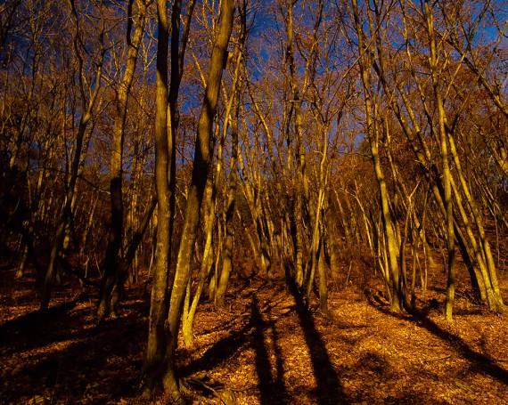 夕日の当たる落葉の雑木林