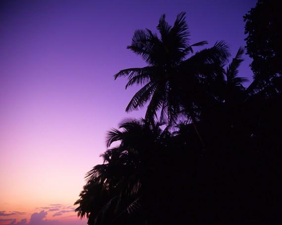 夕暮れの空とヤシの木