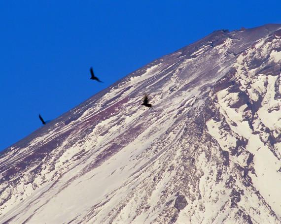 富士山頂と舞うカラス