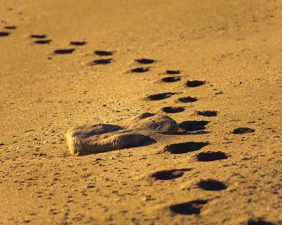 斜陽の砂浜に続く足跡