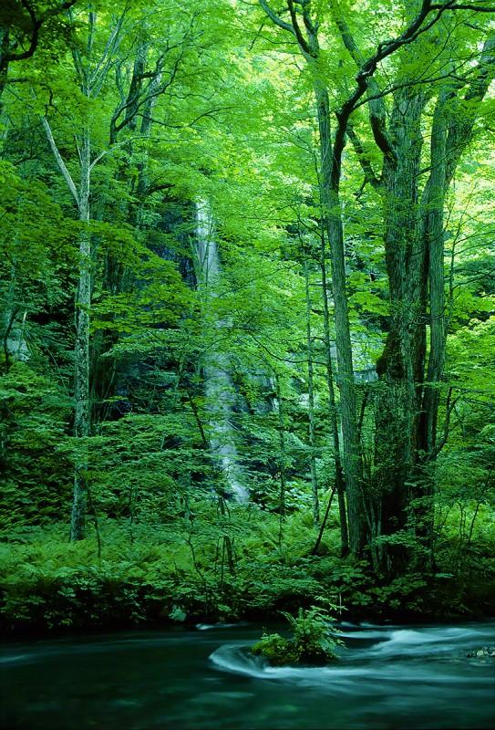 新緑の奥入瀬渓流白糸の滝