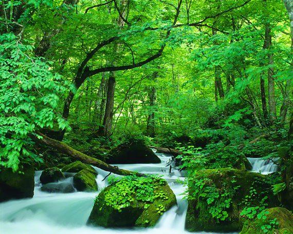 新緑の奥入瀬渓流阿修羅の流れ