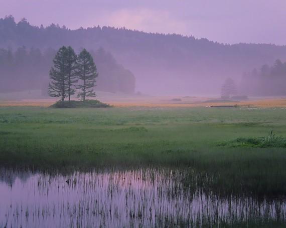 朝靄のニッコウキスゲの湿原と三本杉