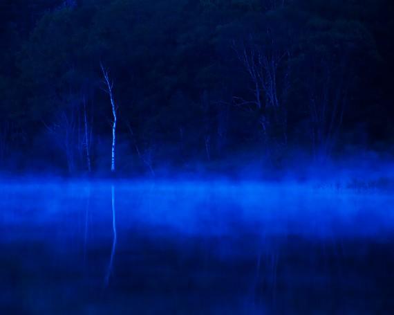 朝靄の湖に映る一本の白樺