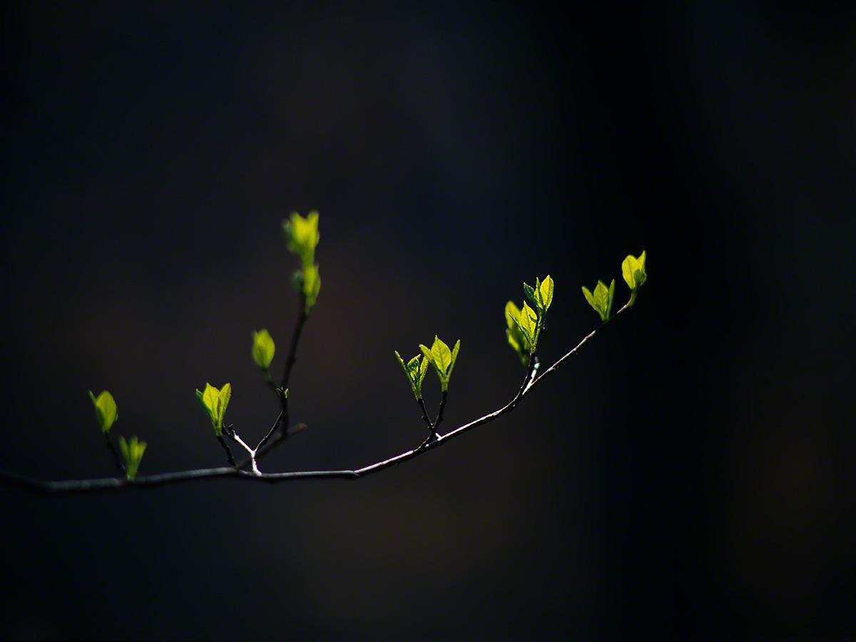 木陰で緑に輝いて並ぶ新芽