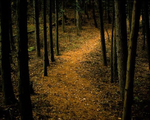 杉林の曲がる山道