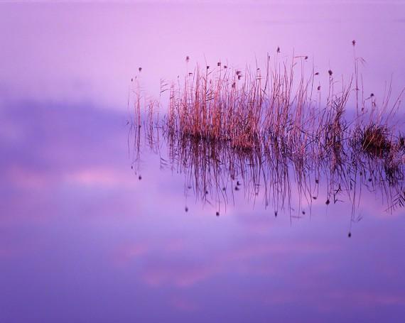 波のない湖に映る葦と夕焼け雲
