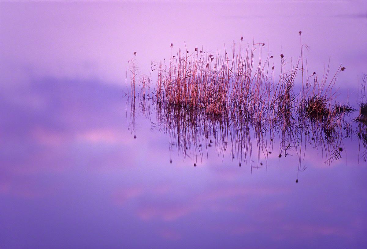 波のない湖に映る葦と夕焼け雲(