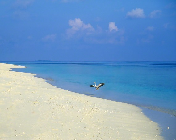 白い砂浜に舞い降りる鳥