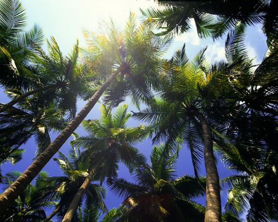 真昼の太陽と青空とヤシの木