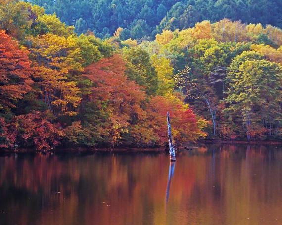 立ち枯れの木と紅葉を映す湖の水面