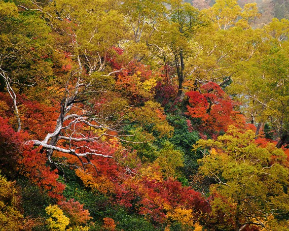 紅葉の中の立ち枯れした木