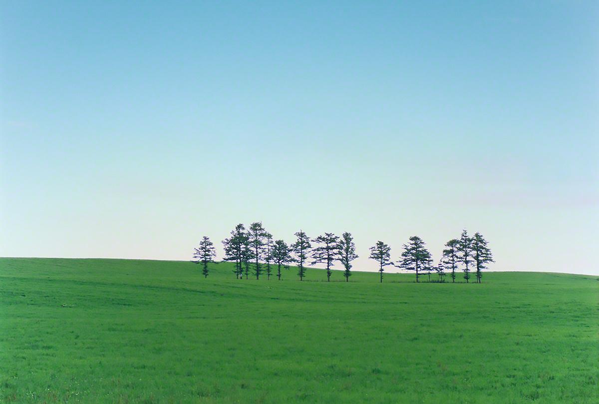 緑の丘と立ち並ぶカラマツの小木