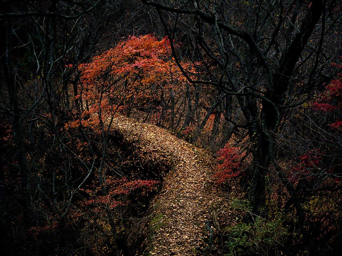 赤いもみじと落葉の山道