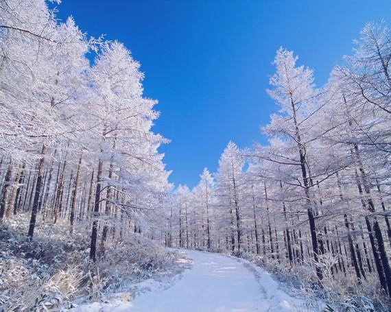 青空とカラマツの樹氷の雪道