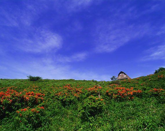 青空とレンゲツツジの丘の山小屋