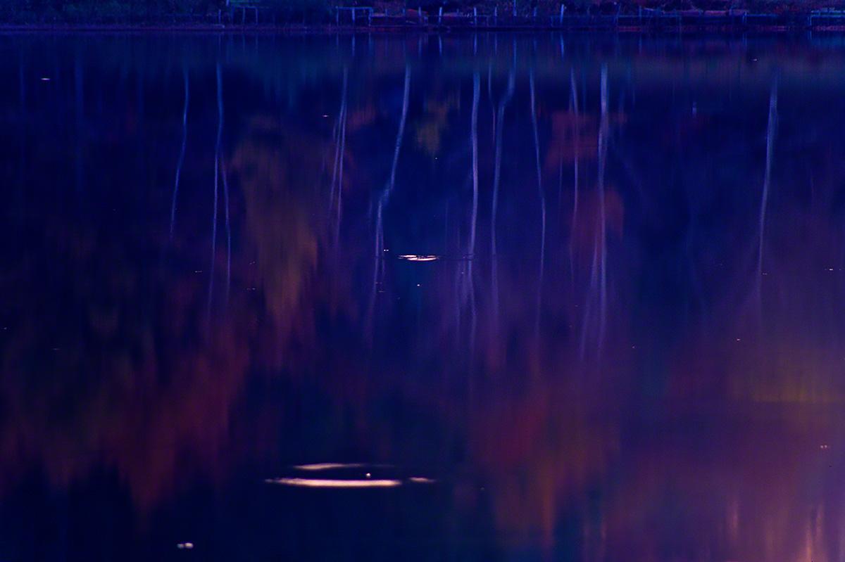 湖面に映る波紋と紅葉の白樺