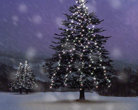 雪面のイルミネーションのモミの木