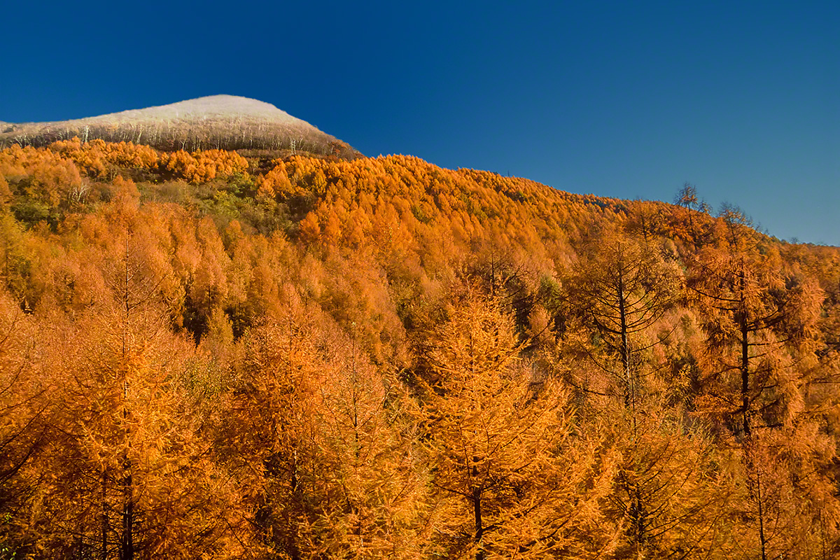 初冠雪の湯の丸山頂と黄葉のカラマツの山腹