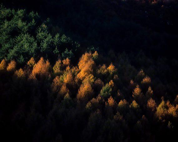 漆黒の山肌と斜光の黄葉のカラマツ