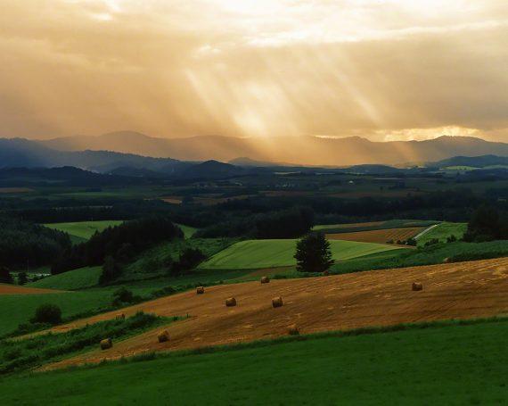 牧草ロールの丘と斜めに差し込む光芒