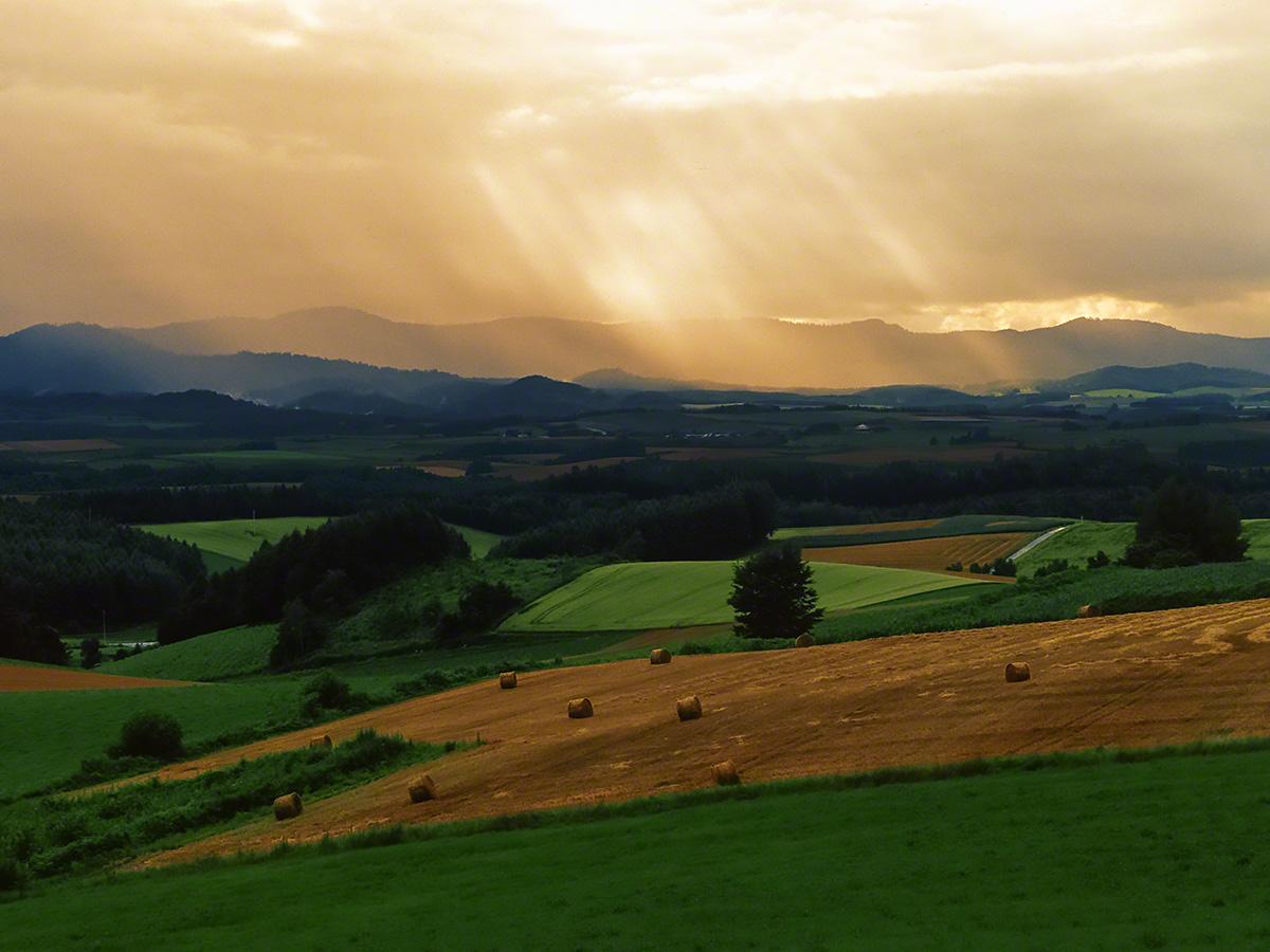 牧草ロールの丘と斜めに差し込む光芒(sdmc)