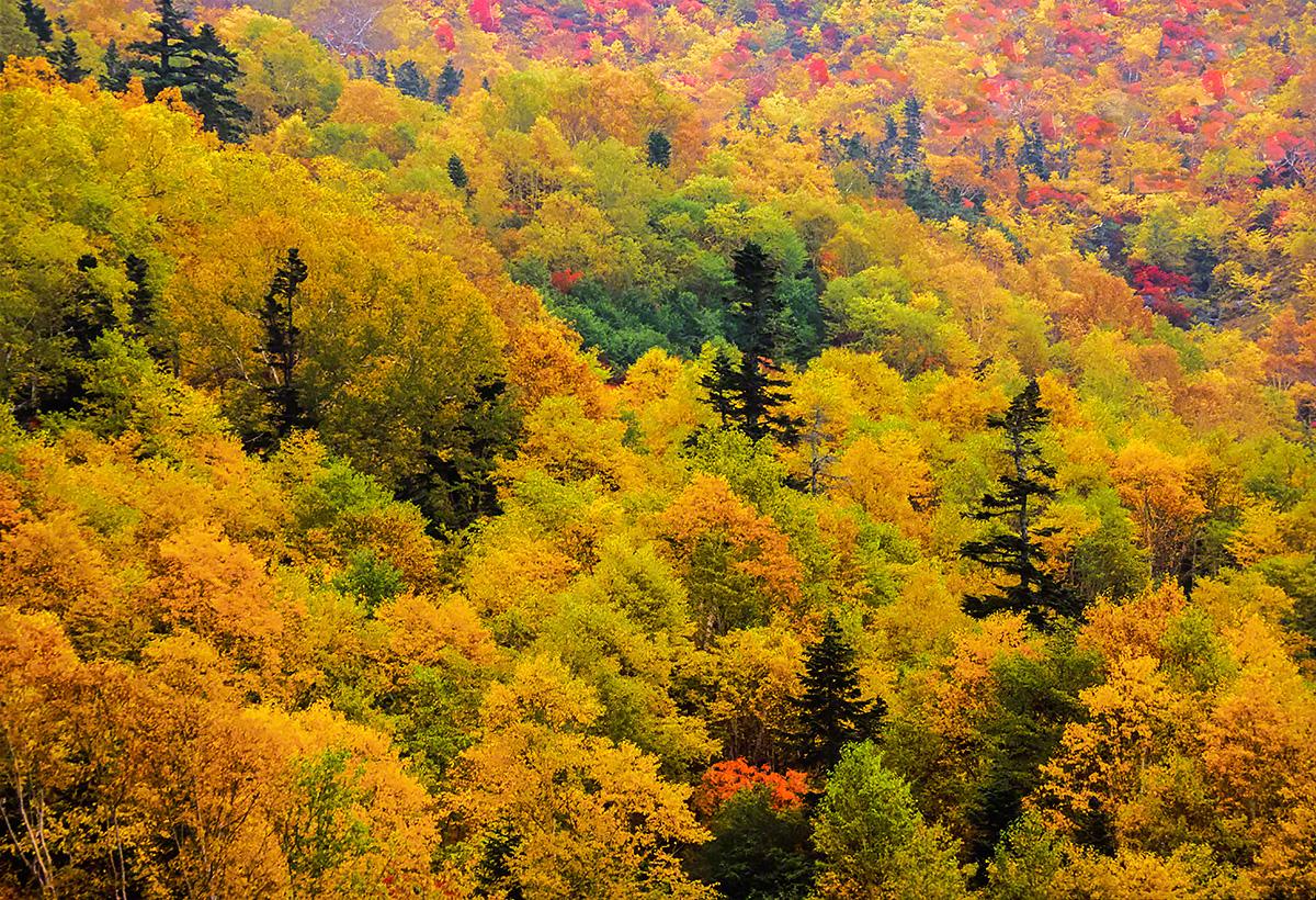 山腹の一面の紅葉