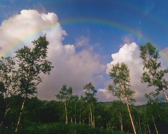 白樺林の上の虹と入道雲