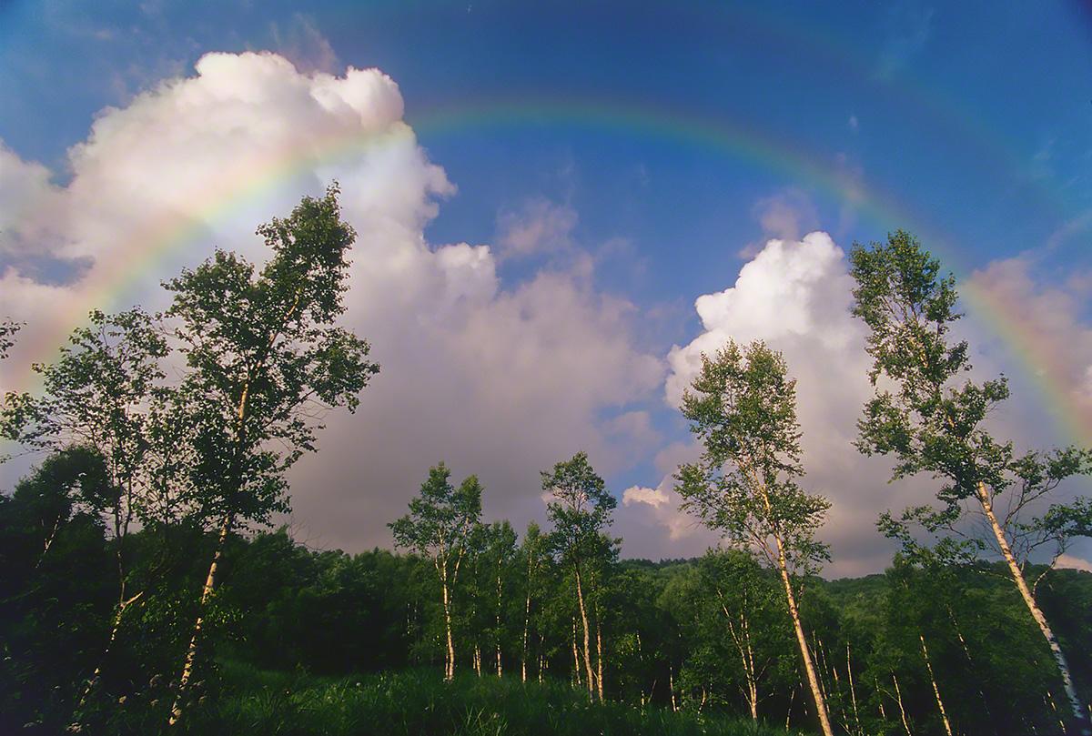 虹と入道雲と白樺林